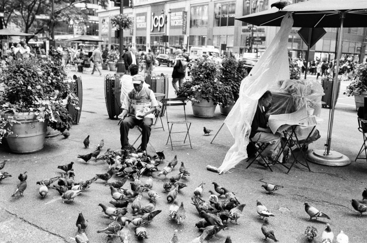 man feeding pigeons herald square_donald groves_091317