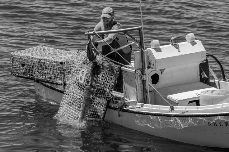 lobsterman hauling traps_070718_donald groves